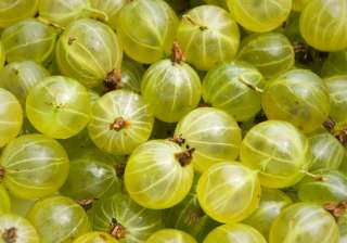 Gooseberry: It is popularly known for its nutritional value, extensively used in natural cosmetic products. It helps in detoxification and acts as a blood purifier which makes skin look radiant and clear.