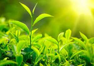 Plants have memory molecules called prions - India Tv