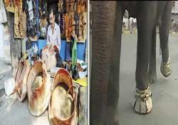believe it or not elephants get rs 40 000 shoes for film