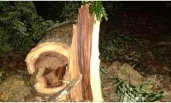 Supreme Court aarey tree cutting