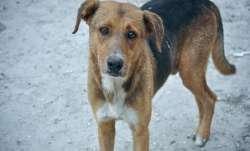 stray dog, dog lover, Maharashtra, Maharashtra dog, dog killed, thane dog killed, thane dog died, do