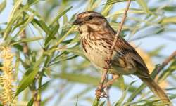Over 50 percent of Indian birds at long-term risk: Report