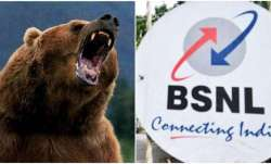 Bear enters BSNL office in Sikkim, attacks resting engineer