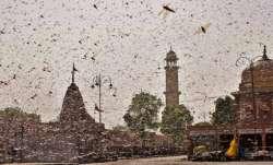 locust, locust swarm, locust attack, locusts, locust meaning, swarm of locusts, locusts swarm, locus