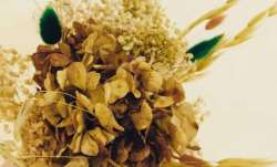 Vastu Tips: Dried flowers are inauspicious if kept at home. Know why